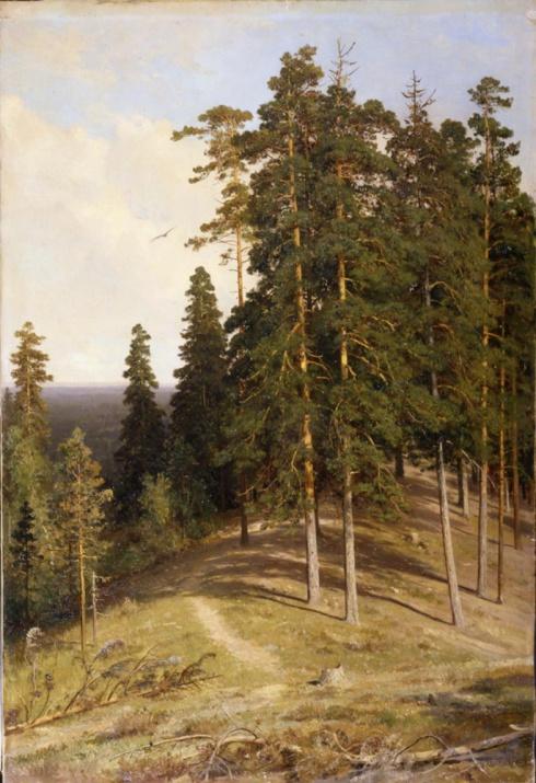 Шишкин И.И. (1832—1898). Лес с горы. 1895