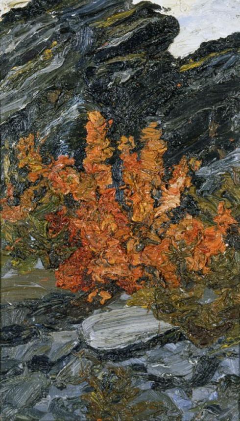 Красные цветы на Новой Земле. 1910-е