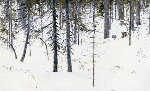 Лес. Этюд